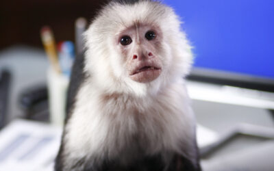 Would You Let a Monkey Take Charge of Assessing the Needs and Priorities of Your Members? When to DIY and When to Get Help With Your Membership Survey